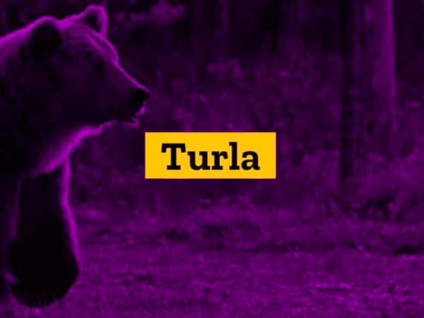Группировка Turla использует новый бэкдор в атаках на США и Афганистан