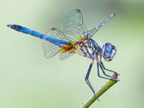 Google подтвердил работу над специальным поисковиком для Китая Dragonfly