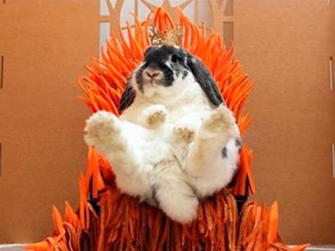 Эксперты раскрыли связь между вирусом Bad Rabbit и Игрой престолов