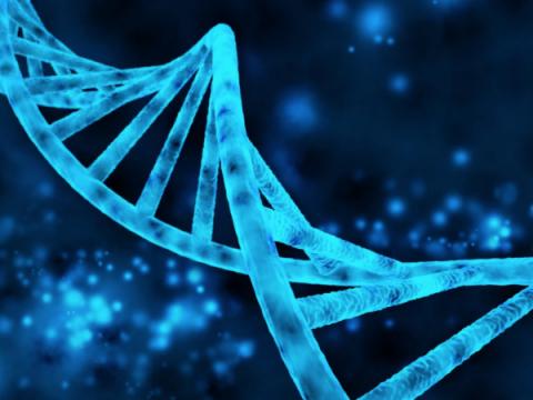 В течение двух недель проект о геноме будет внесен в правительство