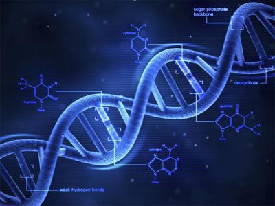 Эксперты обеспокоены утечками из баз данных генеалогических сервисов