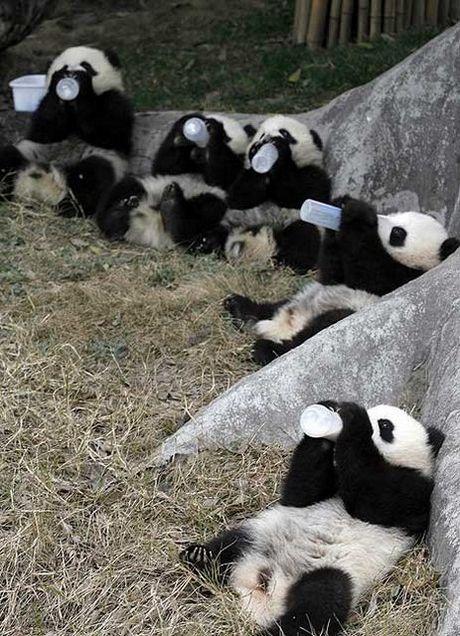 panda_01.jpg